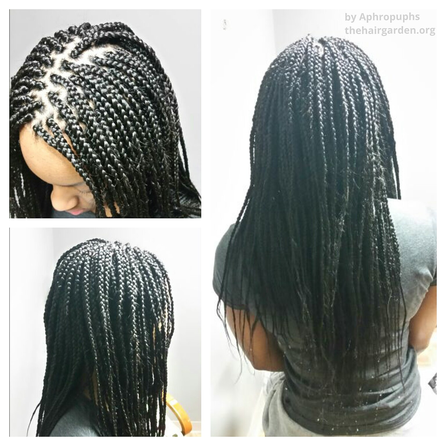 Box braids the hair garden nursery for Salon locks twists tresses